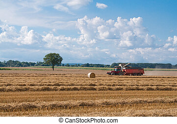 combine harvesting ripe wheat on farm field