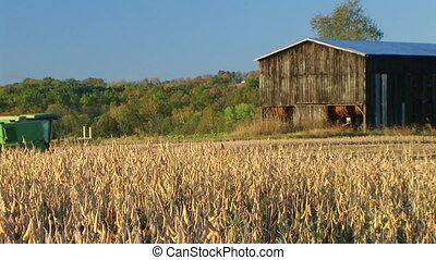 Combine Harvesting Soybeans 05 - Combine harvesting soybean...