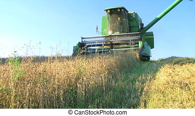 Combine Harvesting Wheat - Combine harvesting wheat crop.