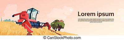 Combine Harvesting Wheat Crop In Field
