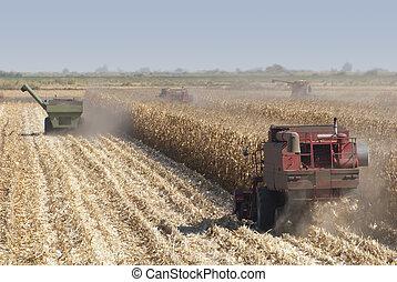 Combine Harvests Corn - Combine harvesting corn, San Joaquin...