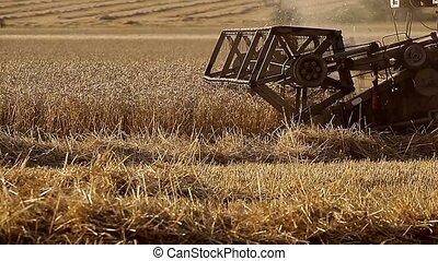 Combine harvests crops