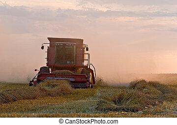 Combine in wheat field