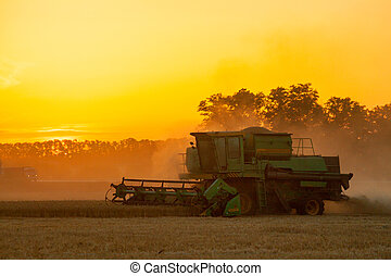 combine harvester working on a wheat field. - Combine...