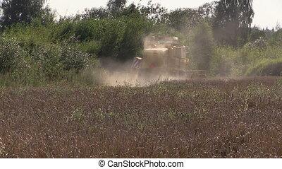 combine on grain field - harvester causes dust on thrashing...