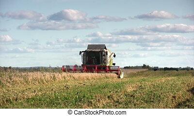 Combine on wheat field