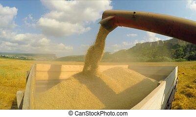 Combine Unloading Grains Into Trailer