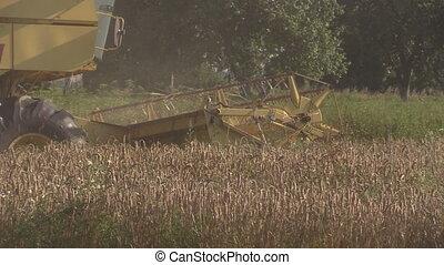 combine work grain field - yellow country harvester combine...