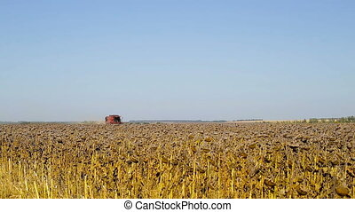Combine working on a sunflower field. Combine harvester in the field during harvest sunflower