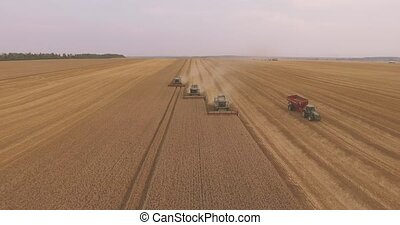 combiner, rassemble, blé, récolte, moissonneuse