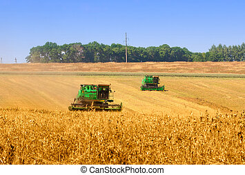 Combines working on a wheat field