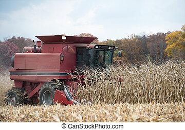 Combining corn field - A farmer combining a field of corn ...