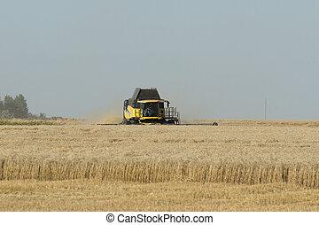 Combining grain