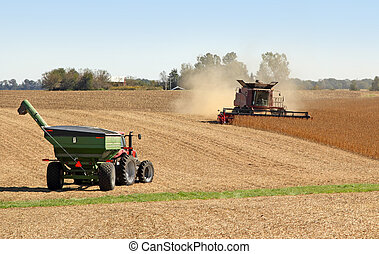 Combining Soybeans - Combine harvesting soybeans and a...