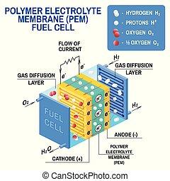combustible, célula, diagram., illustration., vector