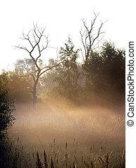 começo matutino, névoa