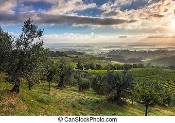 começo matutino, paisagem, em, tuscany