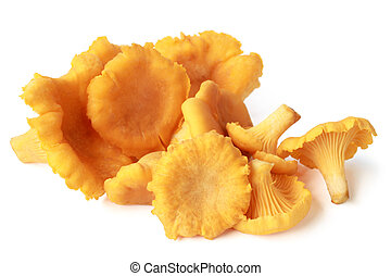 comestível, cogumelo selvagem, chanterelle, (cantharellus,...