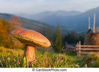comestível, fungos, crescendo, em, a, carpathian, montanhas