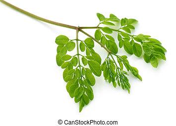 comestible, feuilles, moringa