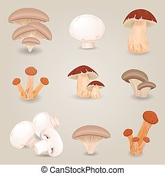 comestible, isolé, collection, champignons, conception, ton