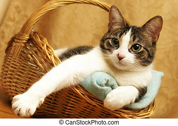 A housecat rests comfortably in a wicker basket.