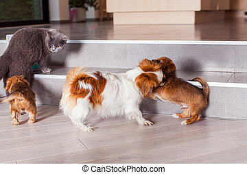 Comfortable life of home pets together at house