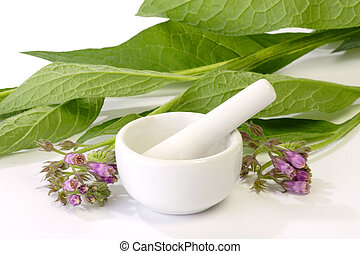 Comfrey with Mortar - Comfrey plants with mortar on bright ...