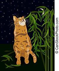 comida, humor, ilustración, gato, vector, abyssinia, hogar,...