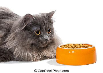 comida para gatos, persa, sentado, tazón