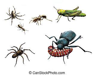 comida, pradera, suelo, oruga, abeja, amarillo, insects:, ...