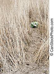 Commemoration - Bouquet of flowers, left in the dry, barren...
