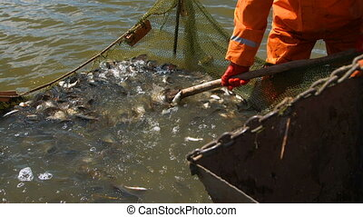Commercial fishing on the lake