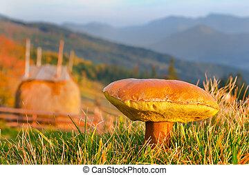 commestibile, funghi, crescente, in, il, carpathian, montagne