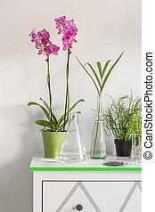 commode, blanc, orchidées