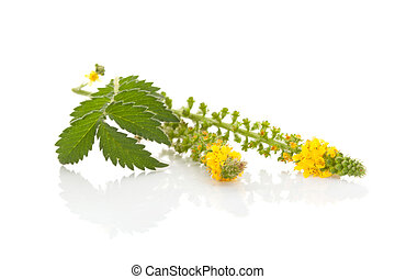Common agrimony isolated on white. Church steeples, natural ...