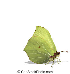 Common Brimstone - Digital illustration of a Common...