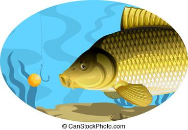 Common carp catching on bait, eps10 illustration with ...