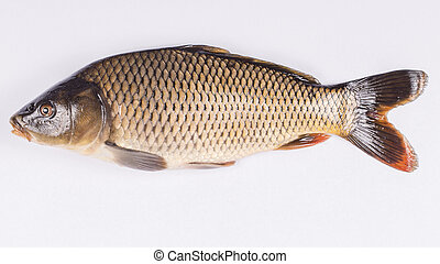 Common carp fish on white background,