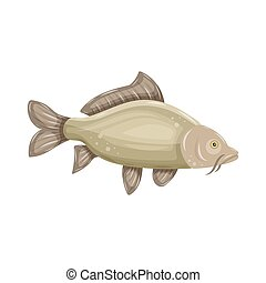 Common Carp isolated on white background. Fresh raw fish - vector illustration. Design element for emblem, logo, label, sign, brand mark