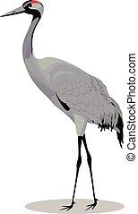 Common crane cartoon - Common crane vector cartoon ...
