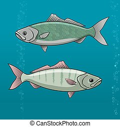 Common Dace. roach cartoon Vector illustration for artwork in small sizes.