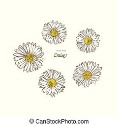 common daisy , hand draw sketch vector.