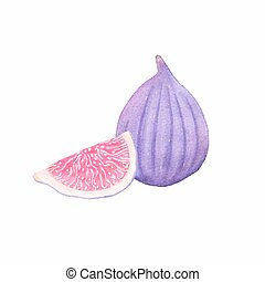 Common fig. Watercolor figs on the white background,...