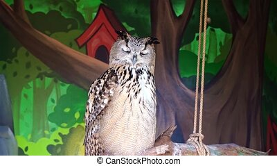 common Filin (Bubo bubo) is a bird of prey from the family of owl, one of the largest representatives of the squad of saline. owl in captivity.