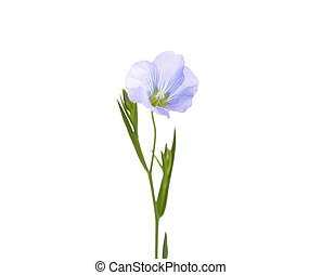 Common flax isolated on white