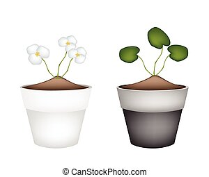 Common Frogbit Plants in Ceramic Flower Pots