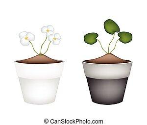 Common Frogbit Plants in Ceramic Flower Pots