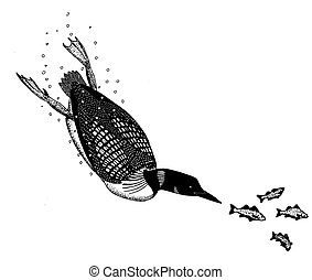 Common Loon - Gavia immer - diving