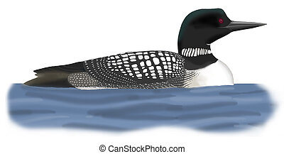 Common Loon - Gavia immer